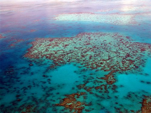 The Great Barrier Reef, Eighth Grade Reading Passage
