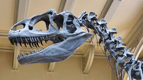 dinosaur skeleton at a museum