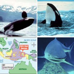 Capture and treatment being considered for young emaciated orca   Watching Our Water Ways