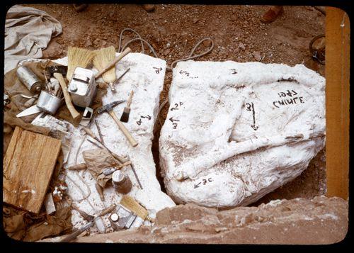 plaster specimen