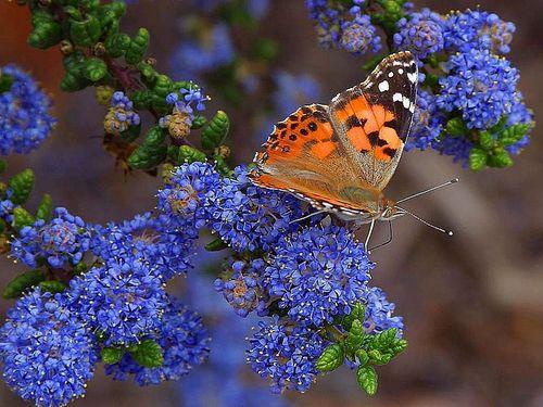 butterflies and flowers grade reading passage