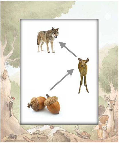 food chain edited