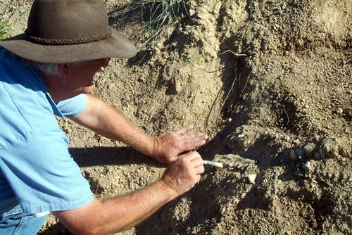Paleontologist working to unearth a fossil