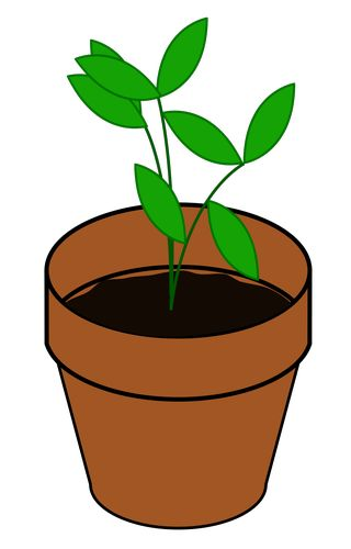 how plants grow text set rh readworks org Growing Tree Clip Art growing plant clipart