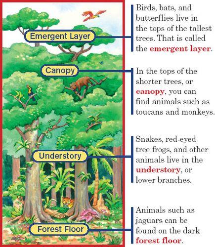Forest Layers Diagram - Wiring Diagram Schemes