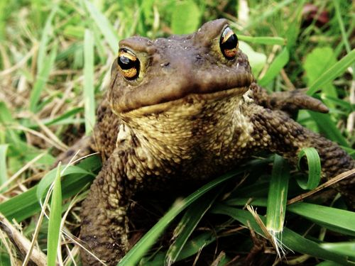 Amphibians And Reptiles Reading Comprehension Passages