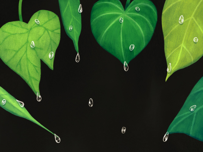 Drip-Tips and Other Adaptation of Plants in Tropical ...